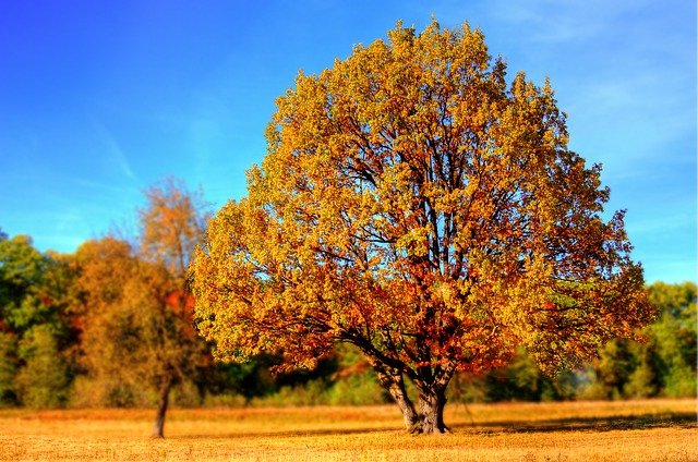 jesieni-podbicie-zaplecz-statlink-786.jpg